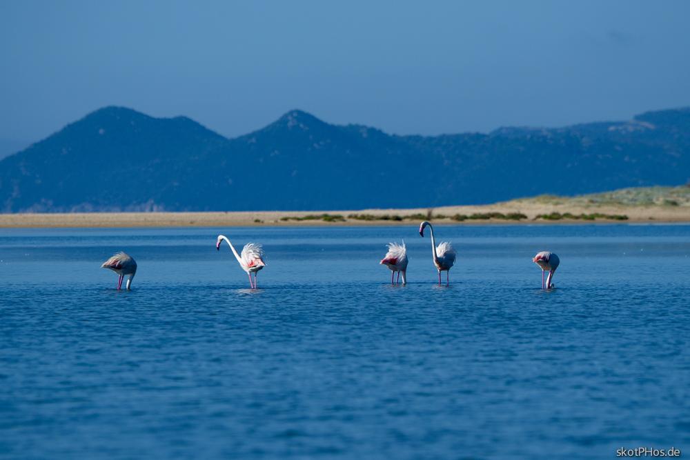 Guten Morgen Flamingos